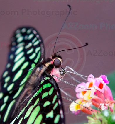 MAB0479BIPP3 