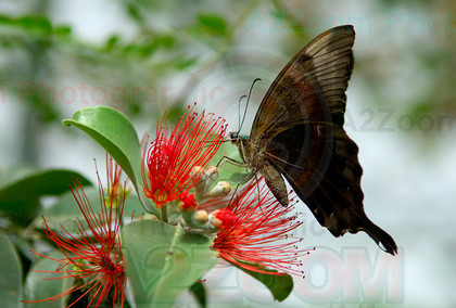 MAB0561BIPP9 