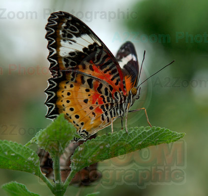 MAB0571BIPP25a 