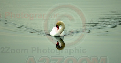 MAB5798 