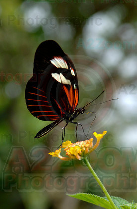 MAB0554BIPP16a 